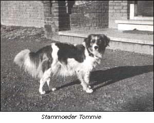 Stammoeder Tommie